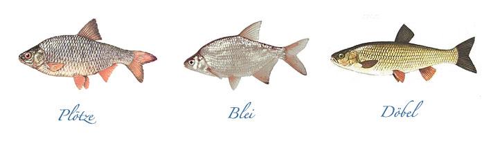 Teichwirtschaft karsten ringpfeil wartha for Gartenteichfische arten